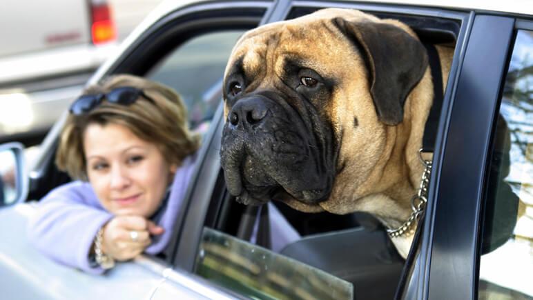 Mit dem Hund auf die Fähre_Credits iStock