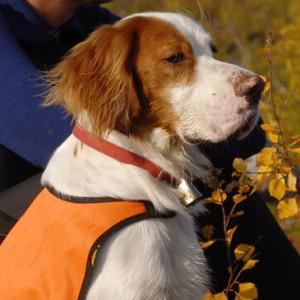 Hund auf Reisen Credits Innovation Norway