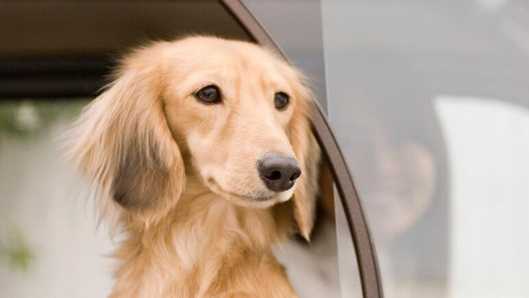 Urlaub mit Hund_ im Auto_Credits IStock