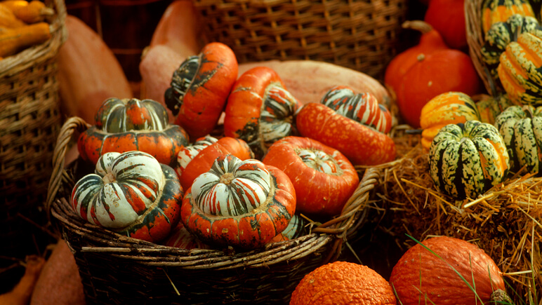 Halloween Pumpkins_co_VisitBritain