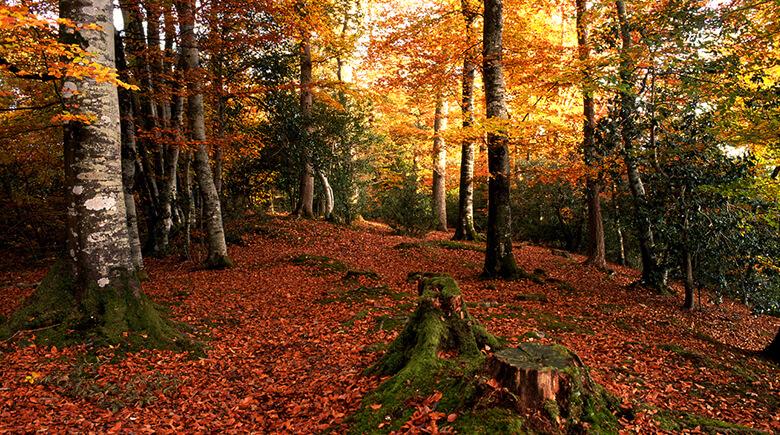 Herbst im Dartmoor National Park