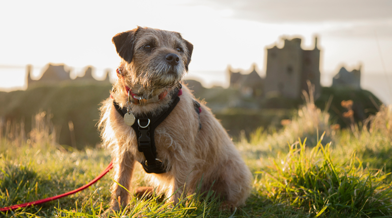 Haustier in England co Visit Britain