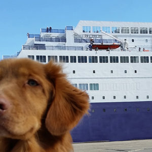 Hund vor der Princess Seaways