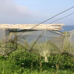 Fangnetze der Vogelwarte in Vente