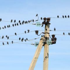 Vögel nahe der Vogelwarte in Vente