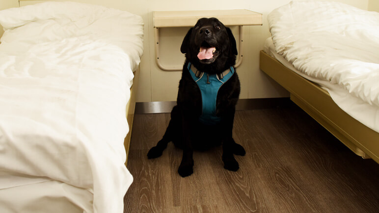 Haustierkabine Fähre © DFDS