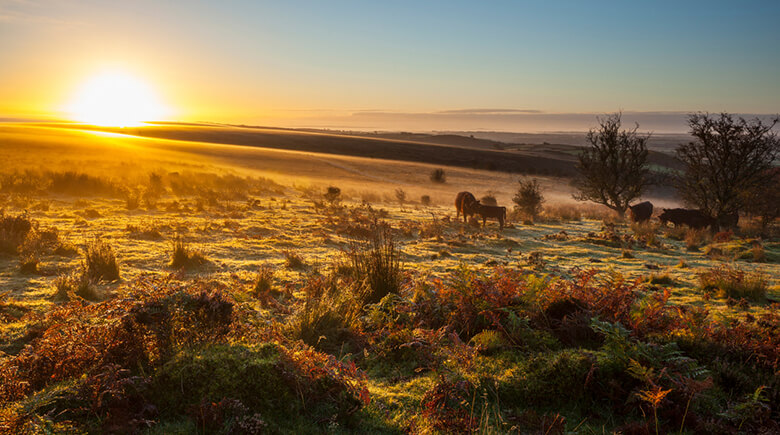 Herbst im Exmoor National Park