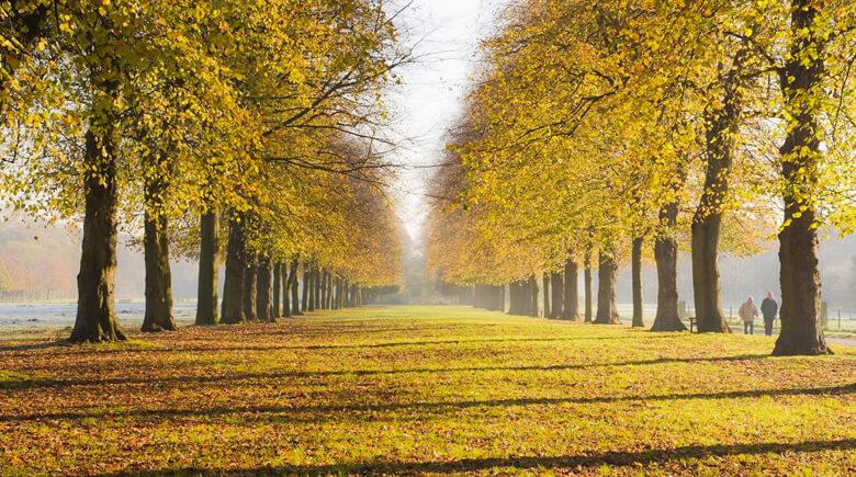 Herbst im Marbury Country Park