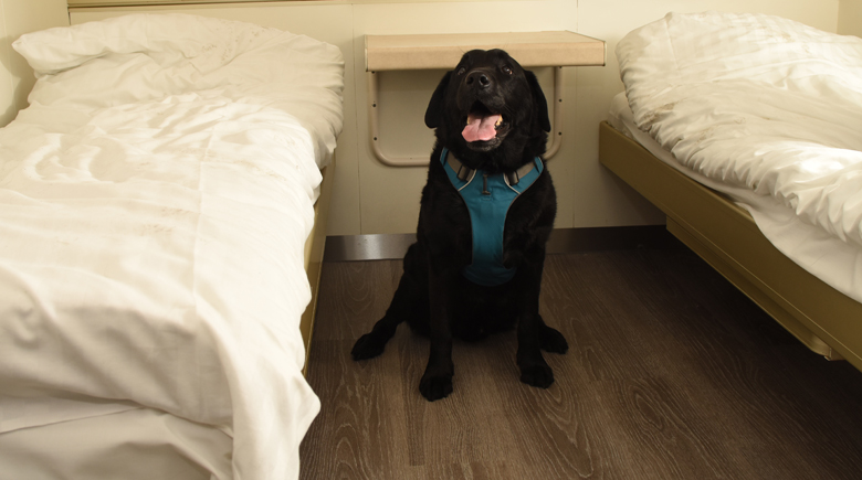 Hund in Haustierkabine