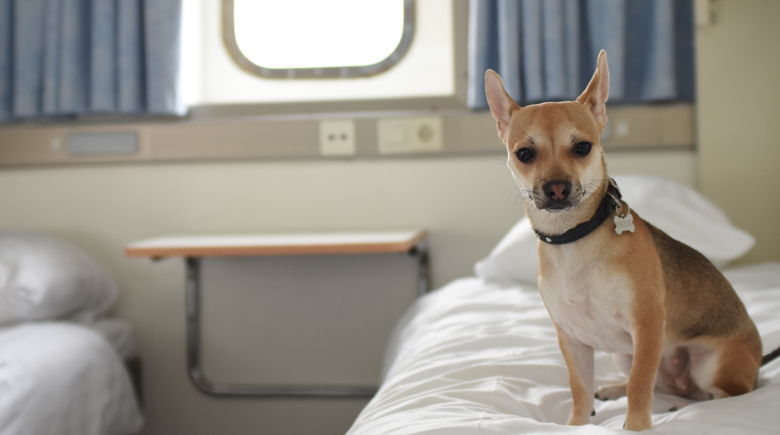 Hund in der Kabine auf dem Bett