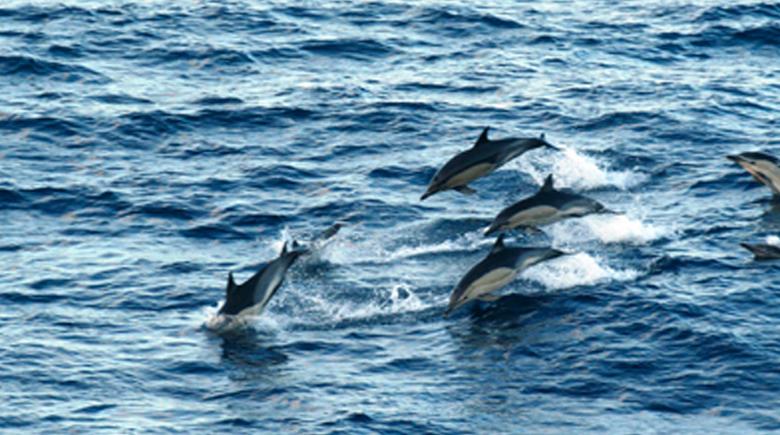 Delfine in der Nordsee